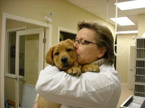 Brown puppy being held in veterinary clinic
